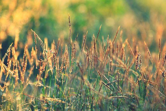 good morning sunshine !!!! Sunrise INDONESIA Photography Eye4photography