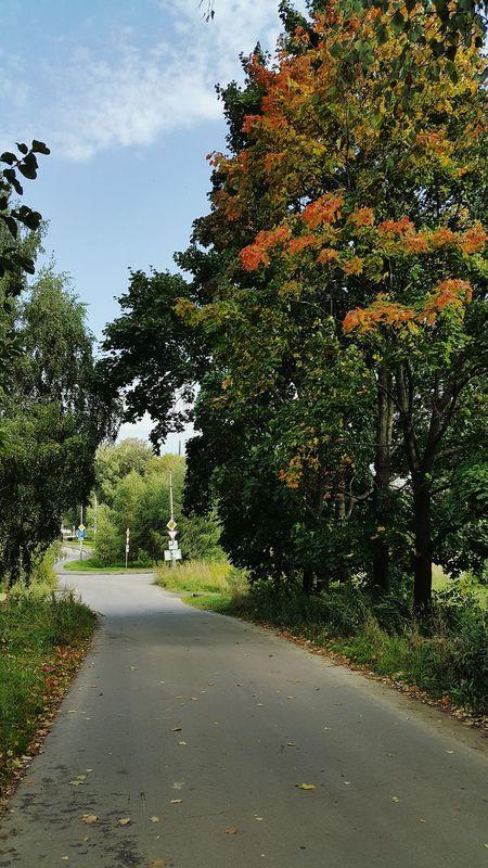 Природа осень ранняяосень деревья Сентябрь Nature Autumn🍁🍁🍁 Autumn Earlyautumn September September 2017