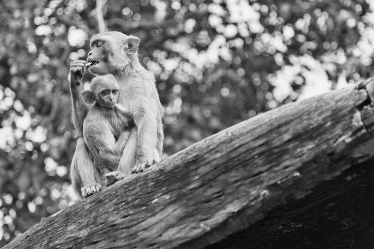 When there is one thing you are never going to find in Germany it's monkeys in the open city. Sometimes they are everywhere and the next time nowhere to be found. Because they are always on the move it's hard to get a good shot, but one time I was at the right spot. Monkey Traveling Shootermag EyeEm Best Shots