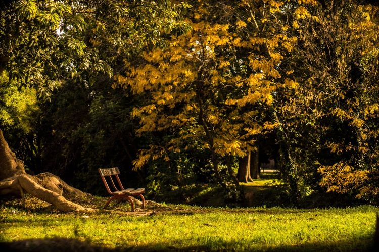 Beauty In Nature Autumn Colors Autumn Fall Beauty Fall Colors Peace And Quiet Peaceful Relax Exploring Discover Your City Sonyalpha