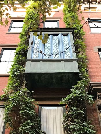 NYC Architecture Building Exterior Window Nature