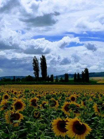 Field Growth Cloud - Sky Agriculture Nature Beauty In Nature Tranquility Landscape Planet Earth