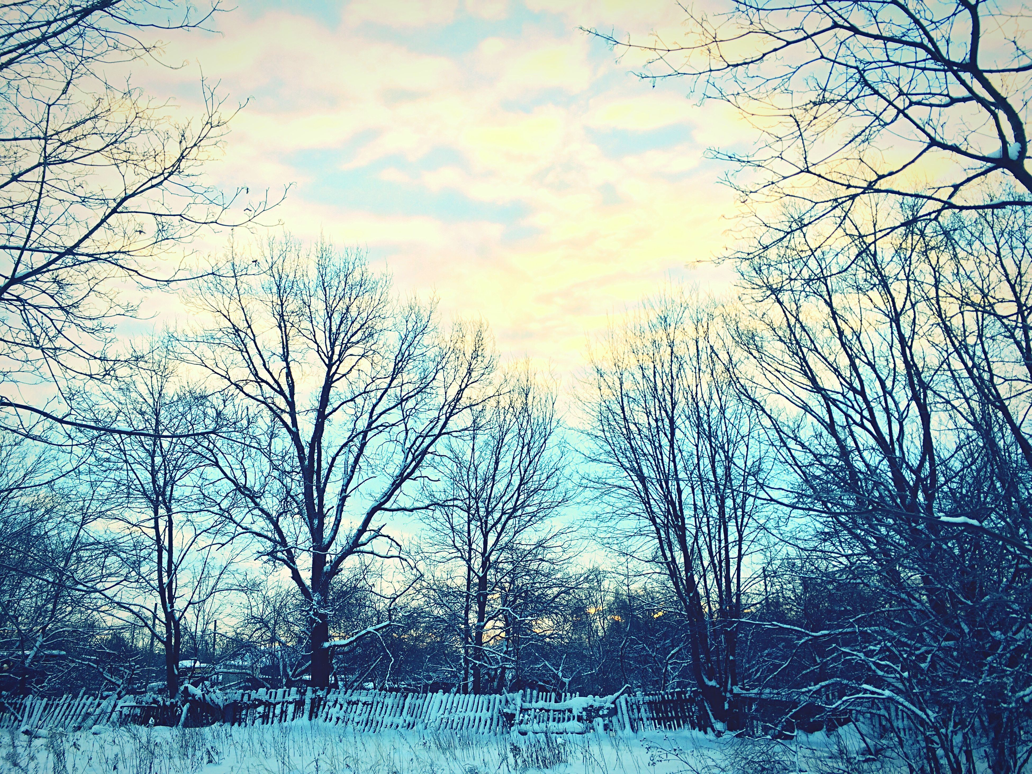 bare tree, tree, branch, sky, winter, cold temperature, snow, cloud - sky, weather, tranquility, season, nature, beauty in nature, scenics, tranquil scene, cloudy, covering, low angle view, outdoors, cloud