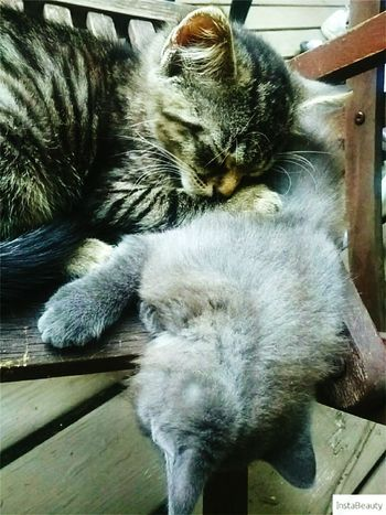 Domestic Cat Pets Domestic Animals Animal Themes Relaxation Cat Close-up Day Kitten Kittens Cute Love Outdoors Beautiful Cats Sleeping Lying Down Portrait Innocence No People Myeverythingandmore Happiness