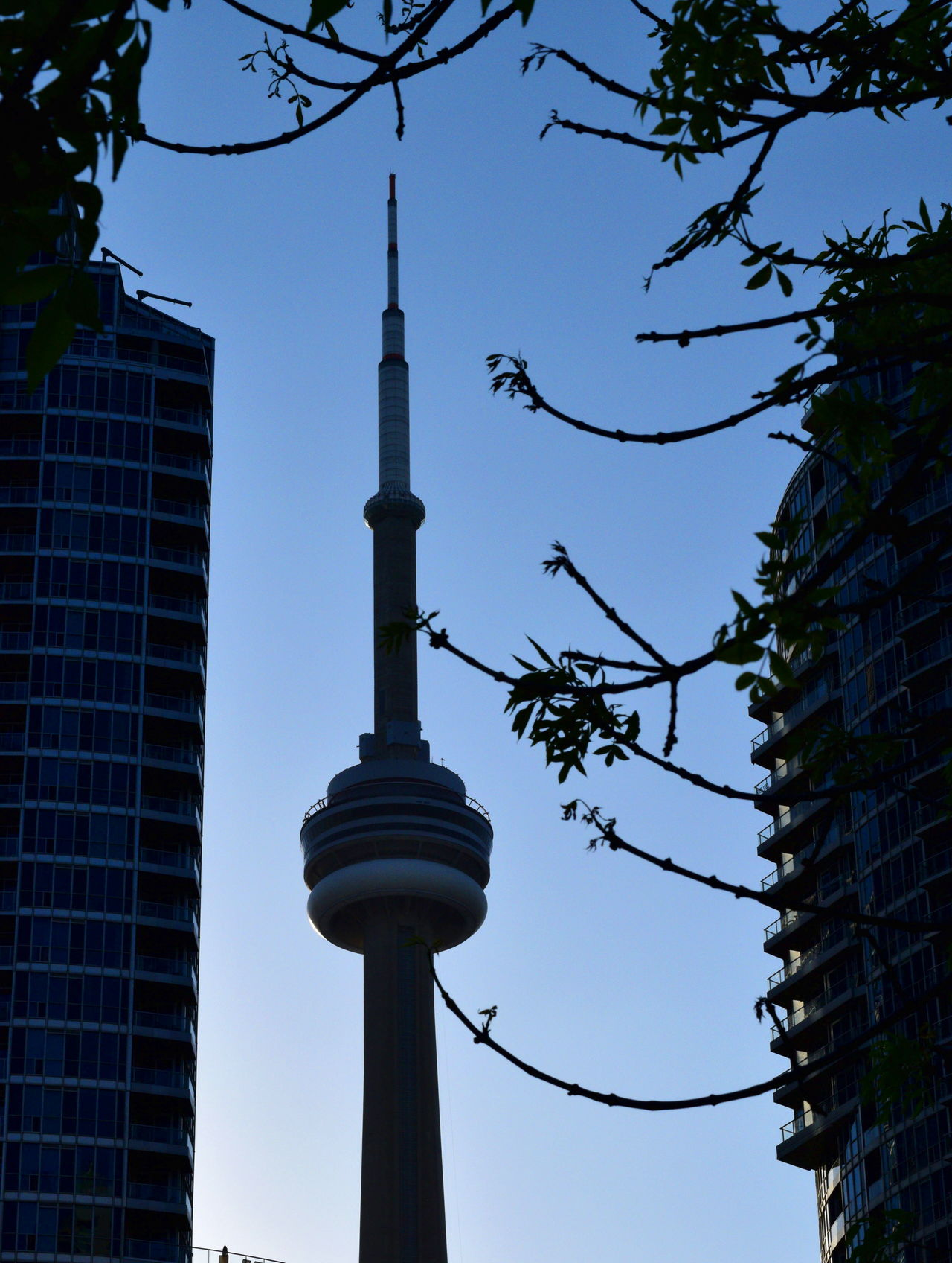 Architecture Blue Branch Building Exterior Built Structure Capital Cities  City Clear Sky CN Tower Day Growth High Section La Tour CN Low Angle View Modern Office Building Silhouette Sky Skyscraper Spire  tall Battle Of The Cities - high Tourism Tower Travel Destinations