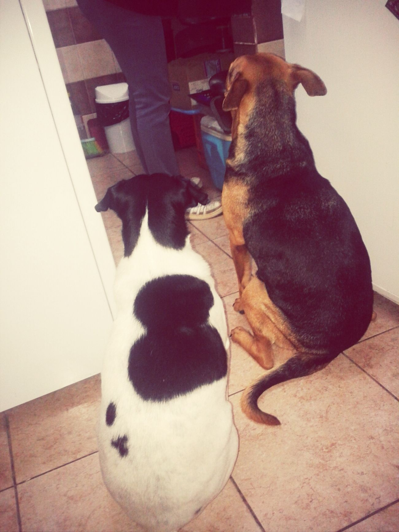 Waiting for dinner :P My Babies ... A Dogs Life
