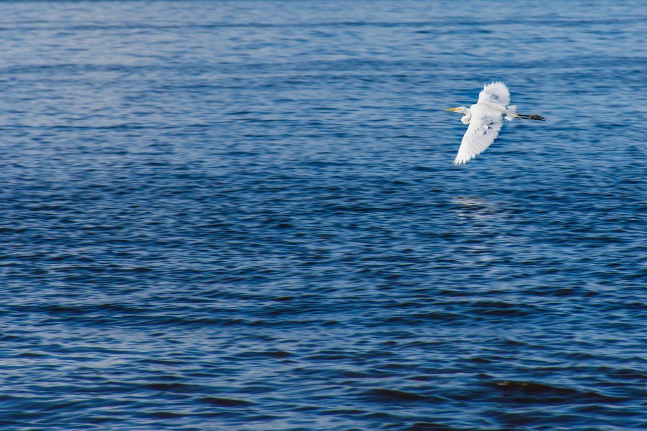 Vuelo Flying Water Bird Nature Outdoors