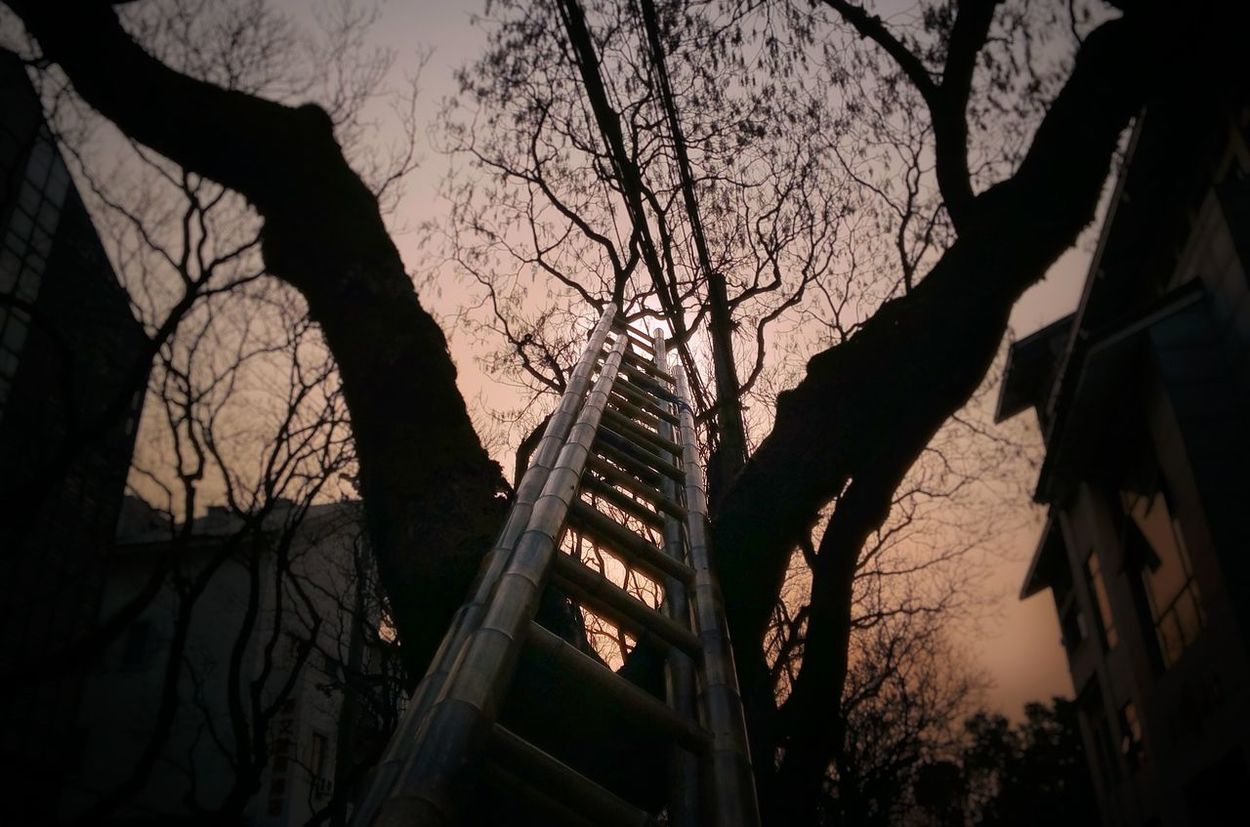 Tree Branch Bare Tree Nature Outdoors Low Angle View Silhouette Sky Tree Trunk Beauty In Nature No People Day Ladders Ladder Ladder To Nowhere Ladder In Sky Laddertoheaven Ladder On A Tree Ladder To Heaven Goingup? Goingup Goingupintheworld Going Up