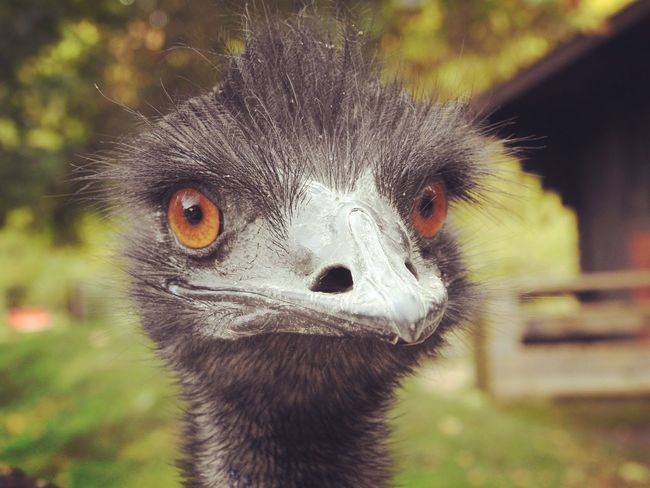 One Animal Animals In The Wild Close-up Wildlife Focus On Foreground Bird Selective Focus Lemur Zoology Day Beak Whisker Outdoors Nature Animal Nose Animal Behavior Beauty In Nature No People