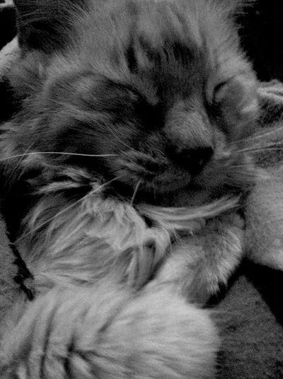 Yellowcat Cat♡ Cat Blackandwhite Black And White