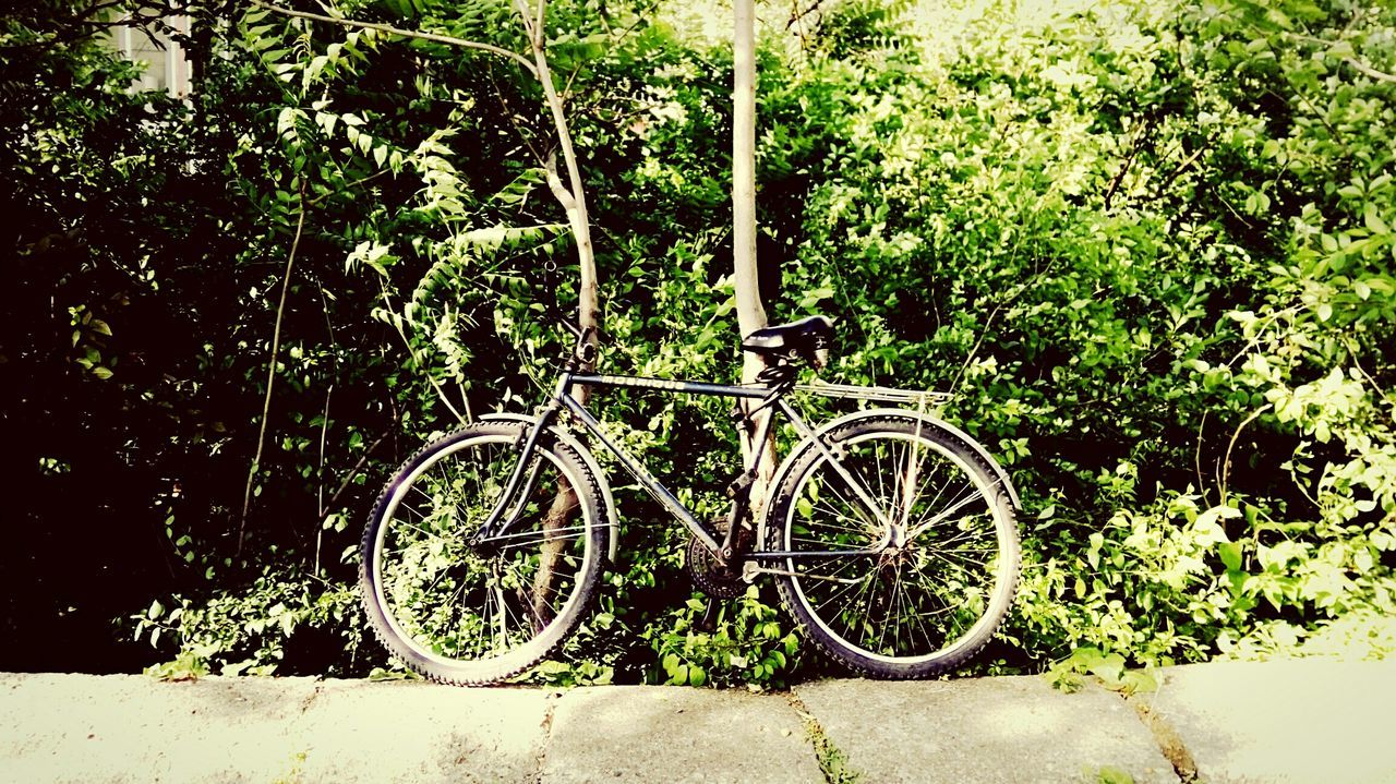 bicycle, transportation, mode of transport, land vehicle, stationary, parking, parked, tree, wheel, leaning, cycle, plant, growth, day, outdoors, no people, travel, nature, bicycle basket, wall - building feature