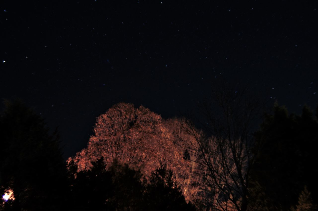 Night scape 1 minute exposure. Astronomy Beauty In Nature Branch Constellation Galaxy Growth Low Angle View Nature Night Night Photography Night Scape No People Outdoors Scenics Sky Space Space And Astronomy Star - Space Star Field Tranquil Scene Tranquility Tree Treetop
