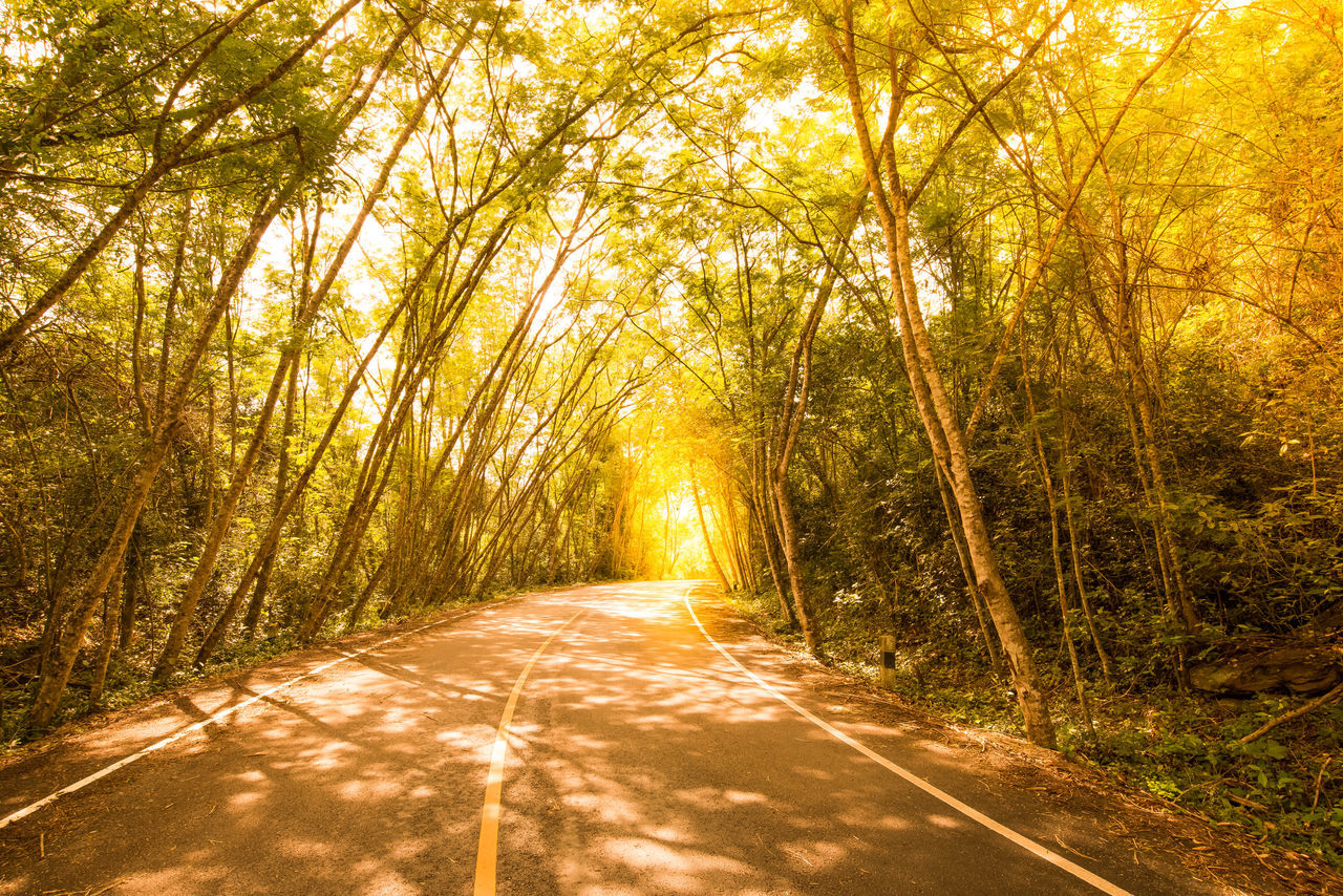 Rubber plantation. Rain Forest Plants Road Tunnel Rubber Plantation Rural Scene Sunlight, Shades And Shadows Thailland Tree Tropical Plants