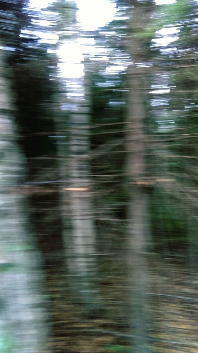 Forest Forest Photography Forest Trees Forest View Silence Panic Scare Trees Lost In The Woods Darkneds