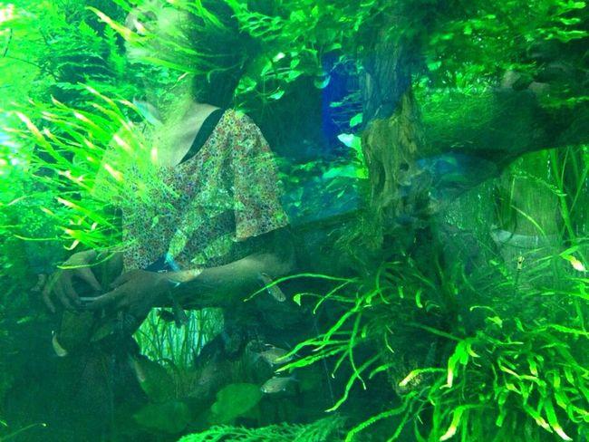 すみだ水族館 東京 水族館 Aquarium Fish Glassreflections Reflection
