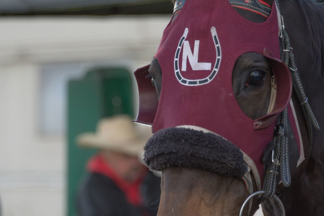 Blinders Close-up Day Horse Horse Racing One Man Only One Person Outdoors People