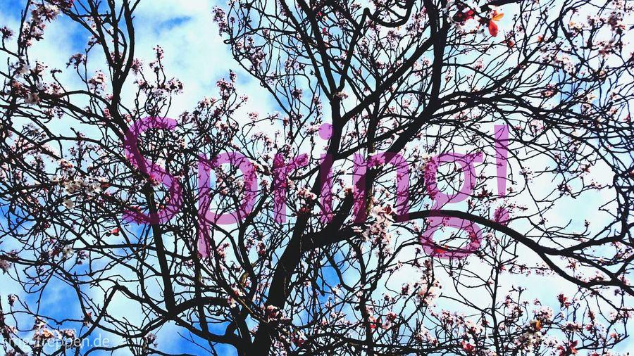 Kirschblüte Spring Popular Photos Flowerporn In Berlin is Springtime, happy weekend for all of you! #smgtreppen www.smg-treppen.de