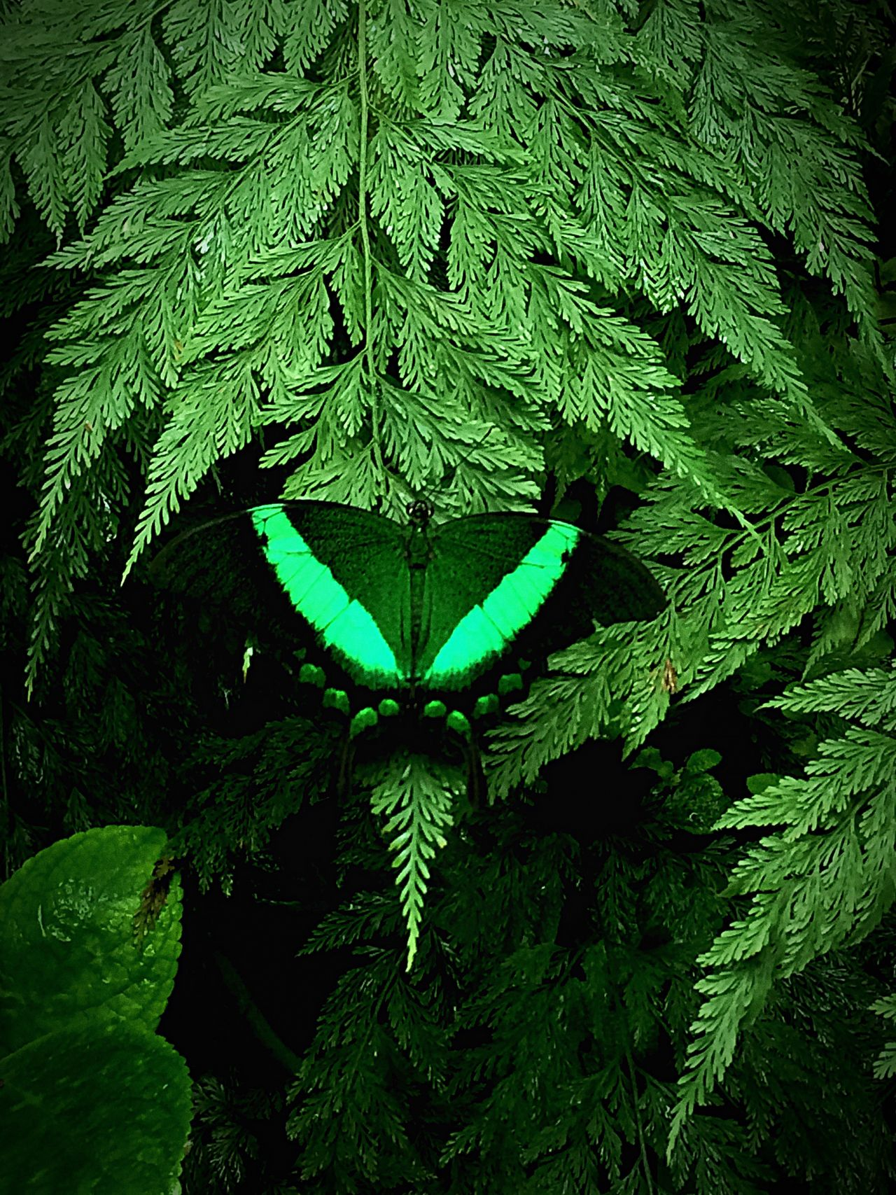 Maximum Closeness Naturospace Honfleur, France 🎈👻 Papillion Butterfly - Insect Green Color ♠️quinntets♥️ Travel Voyage Vacances 👌👍😜 2016♡