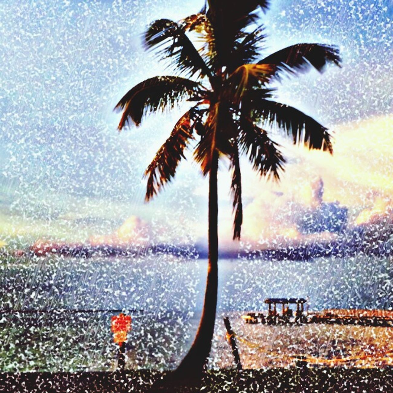 Palm Tree Art Travel Photography