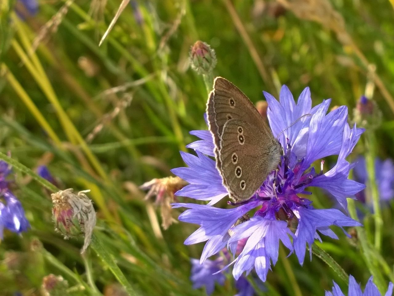 butterfly - insect, insect, one animal, animals in the wild, animal themes, fragility, nature, butterfly, growth, flower, beauty in nature, no people, outdoors, plant, close-up, day, animal wildlife, pollination, freshness, spread wings, flower head
