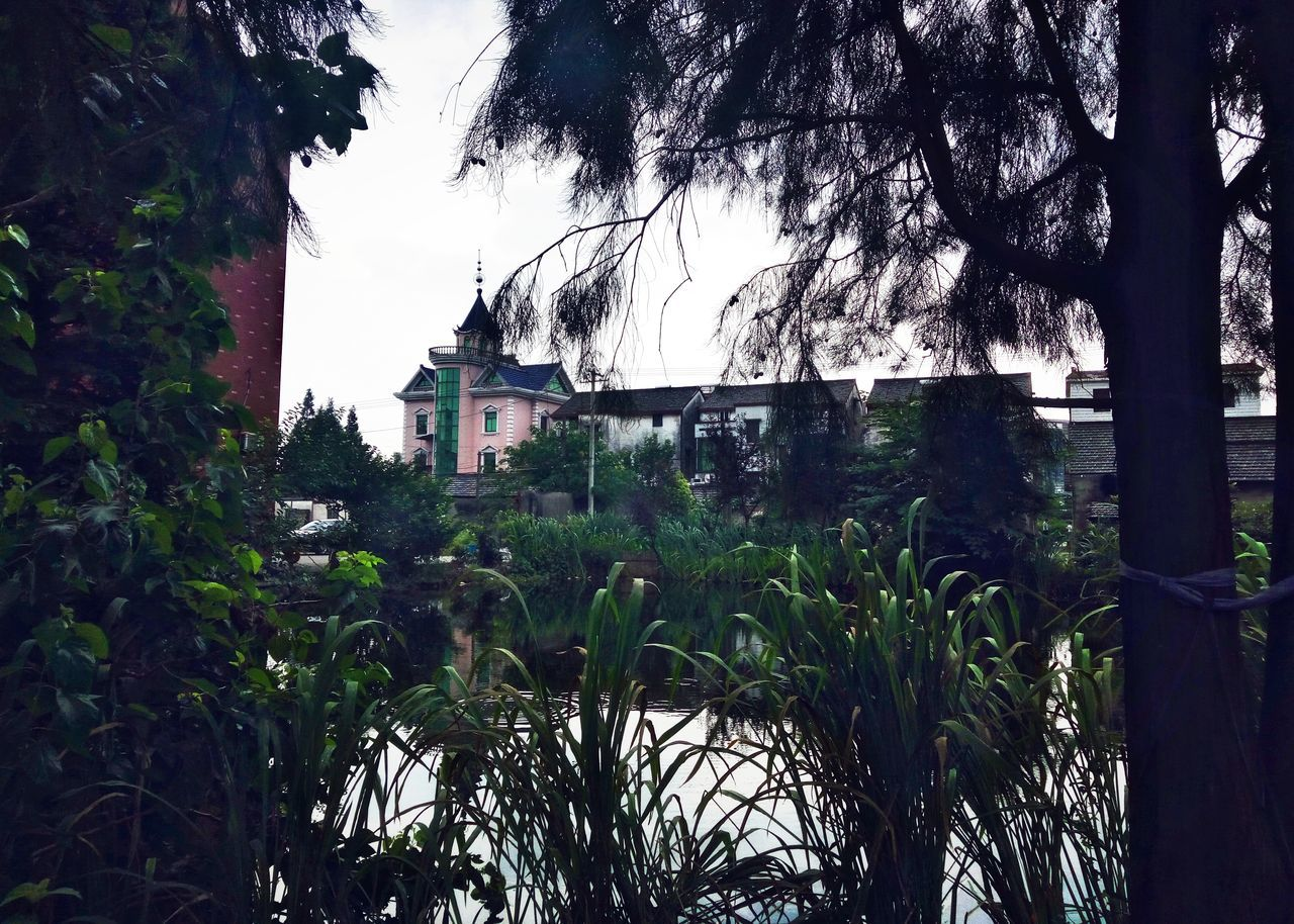 tree, growth, architecture, plant, built structure, no people, building exterior, outdoors, nature, day, grass, beauty in nature, sky