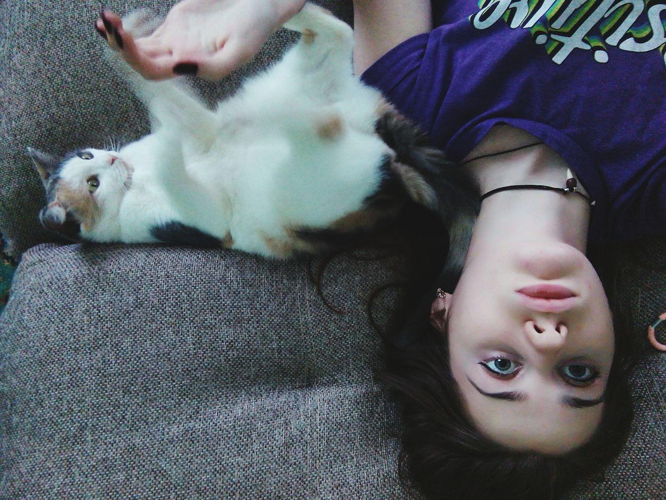 Cat безумие  Easy Life лень