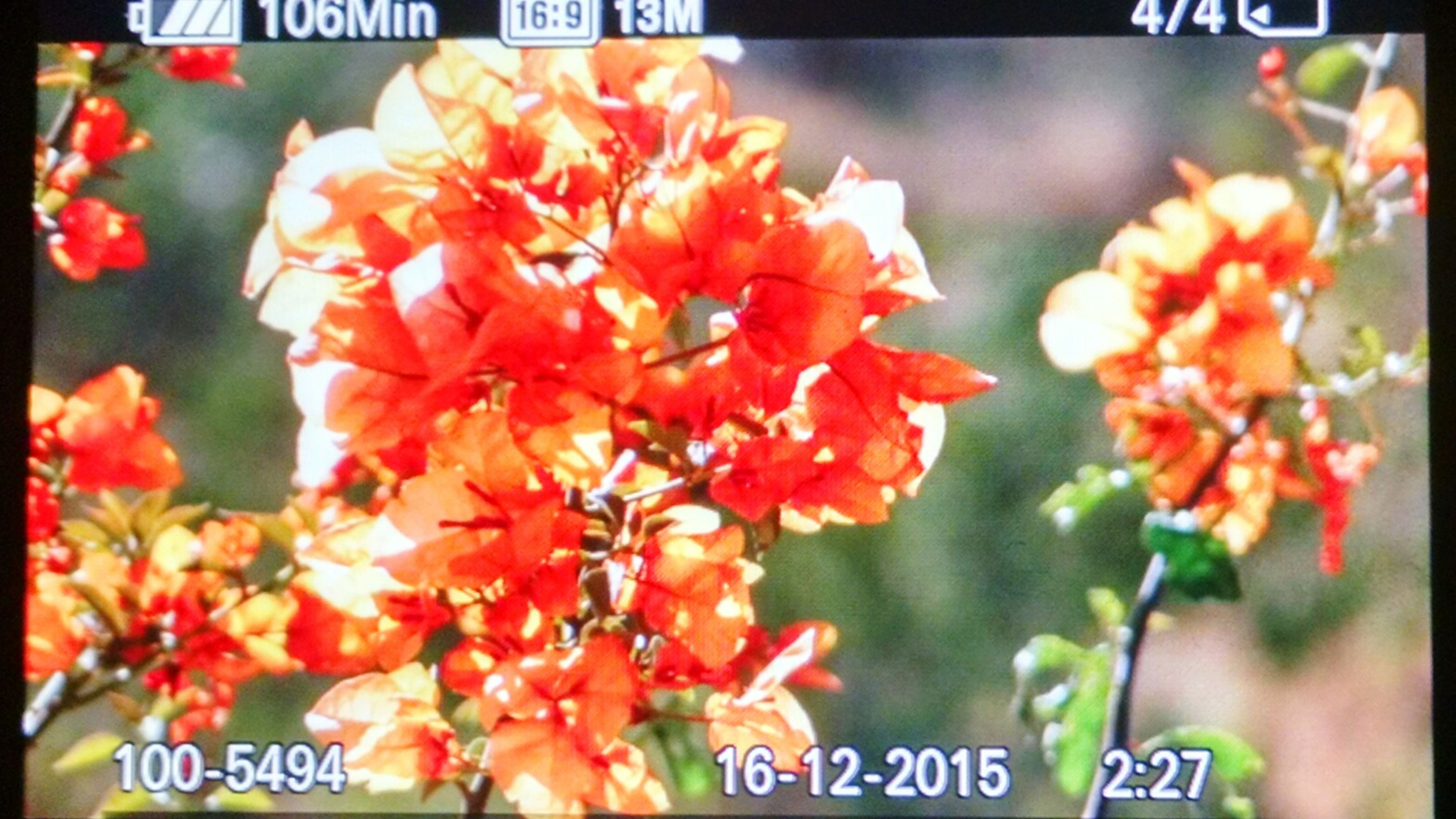 transfer print, auto post production filter, flower, freshness, text, red, close-up, western script, growth, focus on foreground, communication, nature, day, no people, outdoors, beauty in nature, orange color, fragility, plant, petal