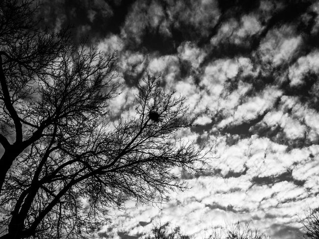 Nature IPhoneography Tree Sky Low Angle View Bare Tree No People Cloud - Sky Outdoors Beauty In Nature Day Treetop Taking Photos Iran Check This Out Prespective Cold Temperature Black And White B&w Mobilephoto Tabriz Lovely Black And White Photography Middle East MonochromePhotography