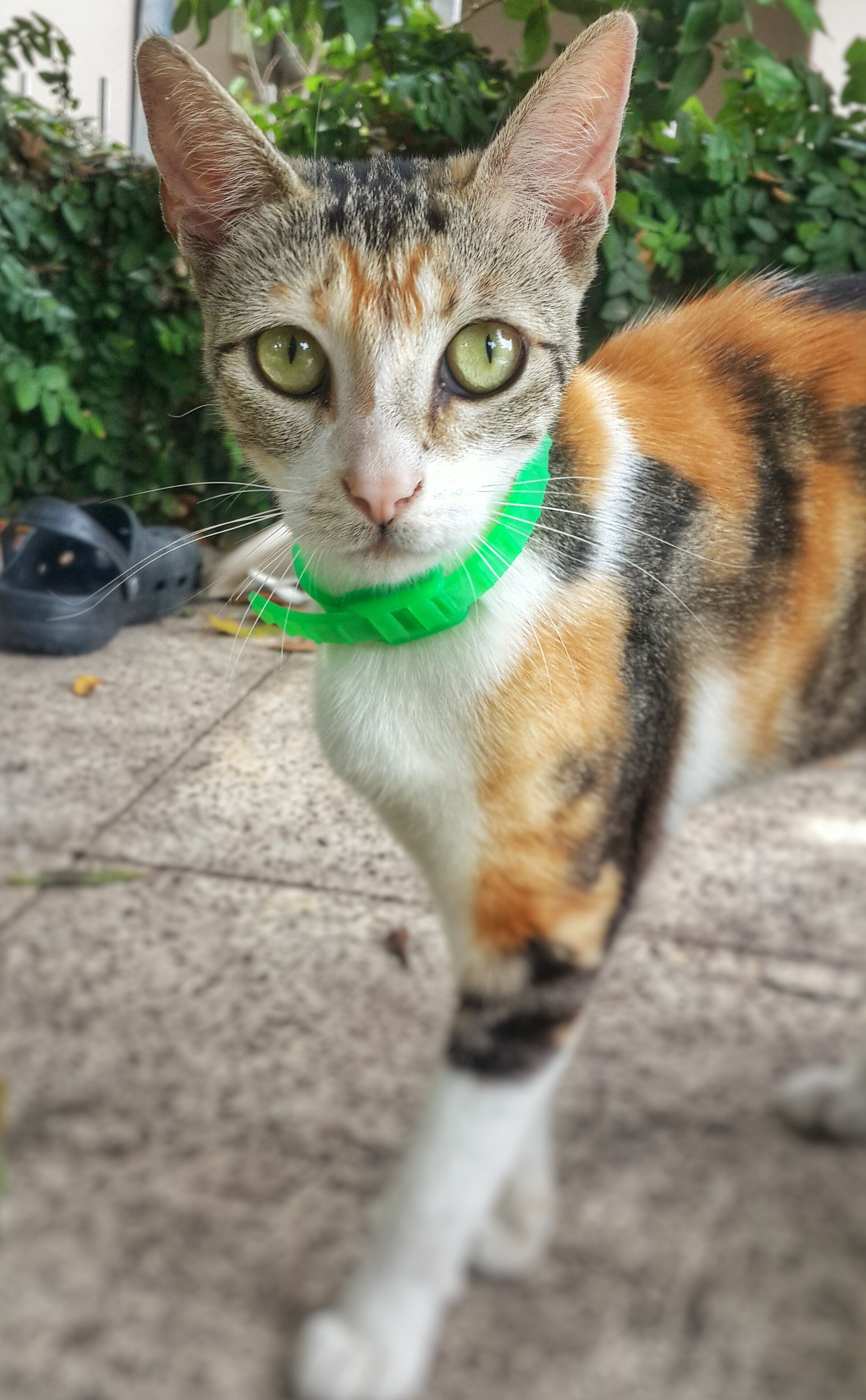animal themes, one animal, pets, domestic animals, domestic cat, mammal, cat, portrait, looking at camera, feline, whisker, focus on foreground, selective focus, close-up, street, alertness, front view, sitting, animal head, day