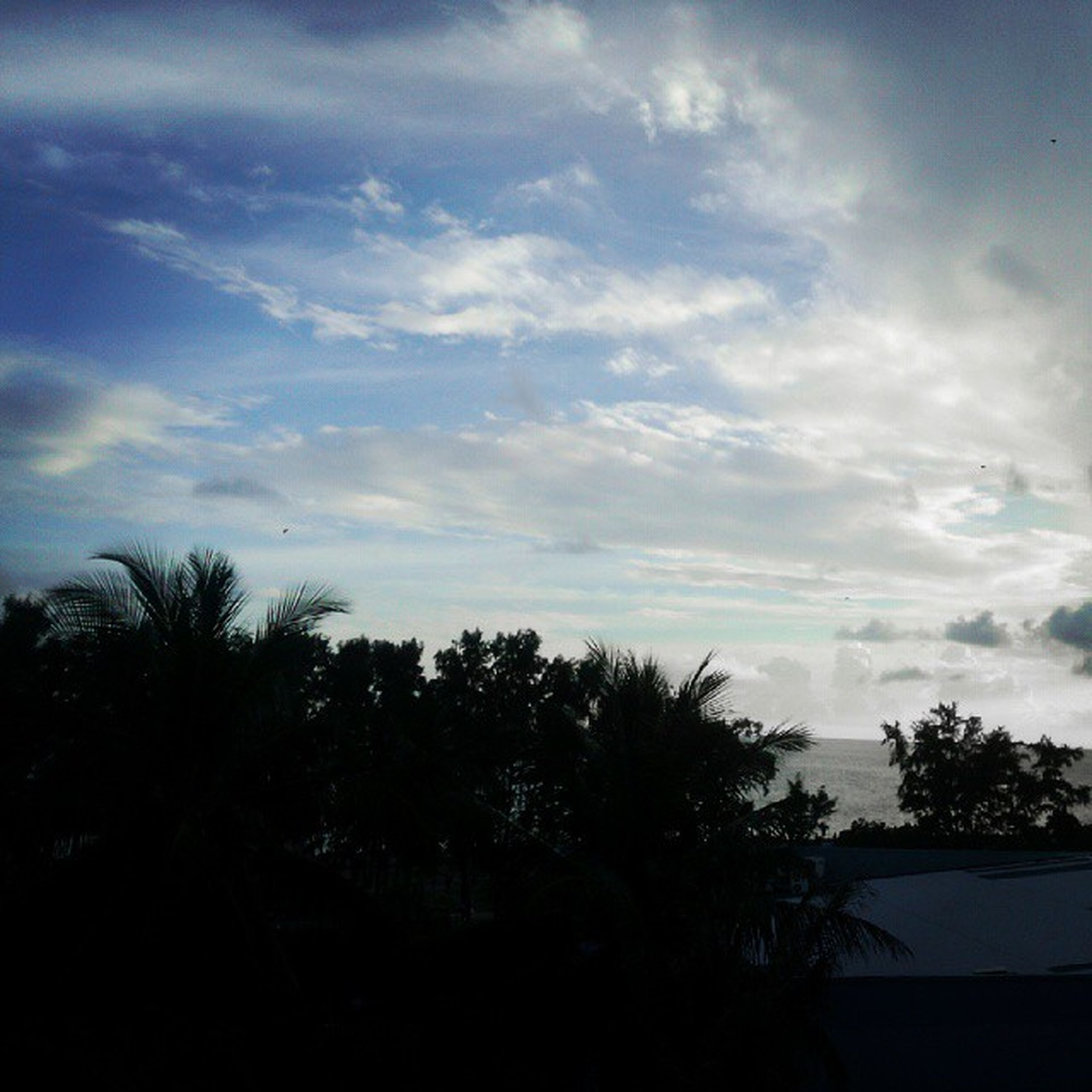 tree, silhouette, sky, cloud - sky, tranquility, tranquil scene, beauty in nature, scenics, nature, sunset, cloud, cloudy, growth, palm tree, dusk, outdoors, landscape, idyllic, low angle view, no people