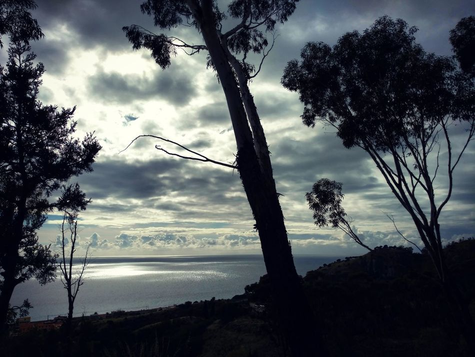 Calabria jonica Calabria (Italy) Tree Cloud - Sky Sky Silhouette Nature Sunset Beauty In Nature No People Outdoors Day Lost Intothewild Nature Photography Nature Mistycal Naturelovers Mediterranean