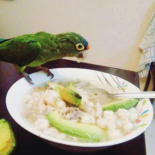 ShareTheMeal Poli Petslife Pet Life  Nature Beauty Pozoletime Mexican Food Enjoying Life Ready-to-eat Zihuatanejo