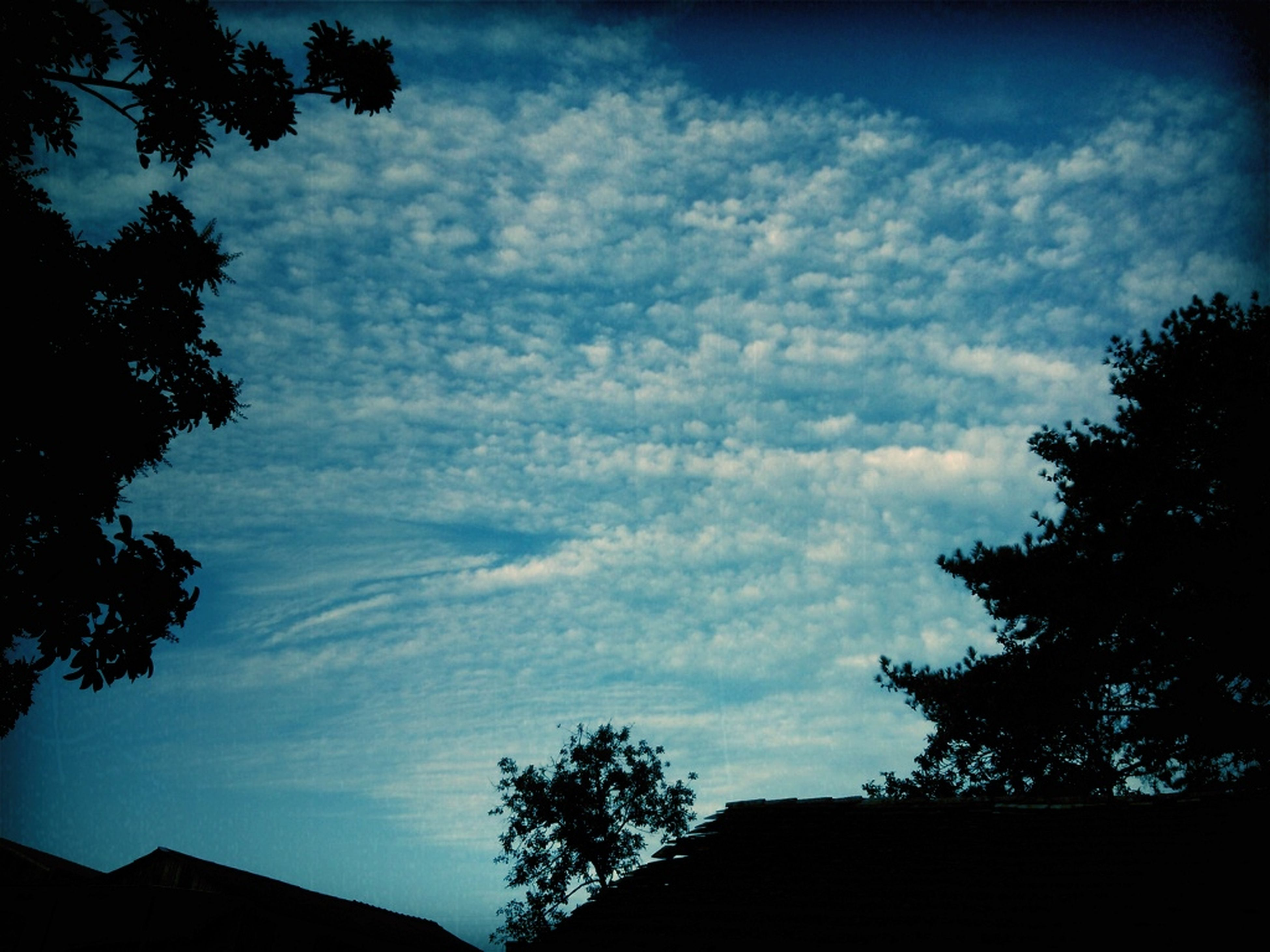 tree, low angle view, sky, silhouette, cloud - sky, built structure, building exterior, architecture, nature, beauty in nature, cloud, tranquility, cloudy, high section, branch, house, growth, scenics, dusk, outdoors