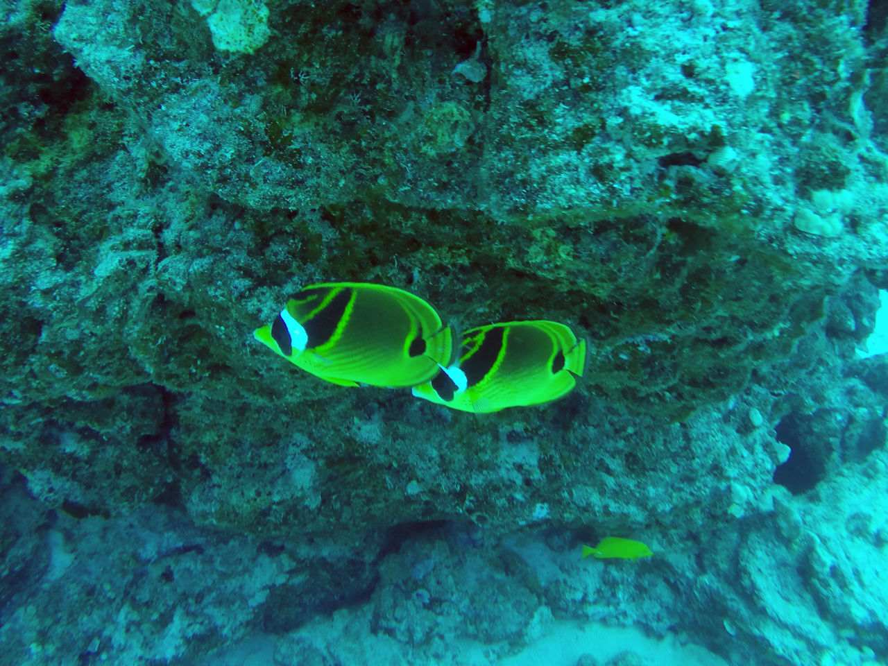 Bandits Fish Hawaii Kona SCUBA Scuba Diving