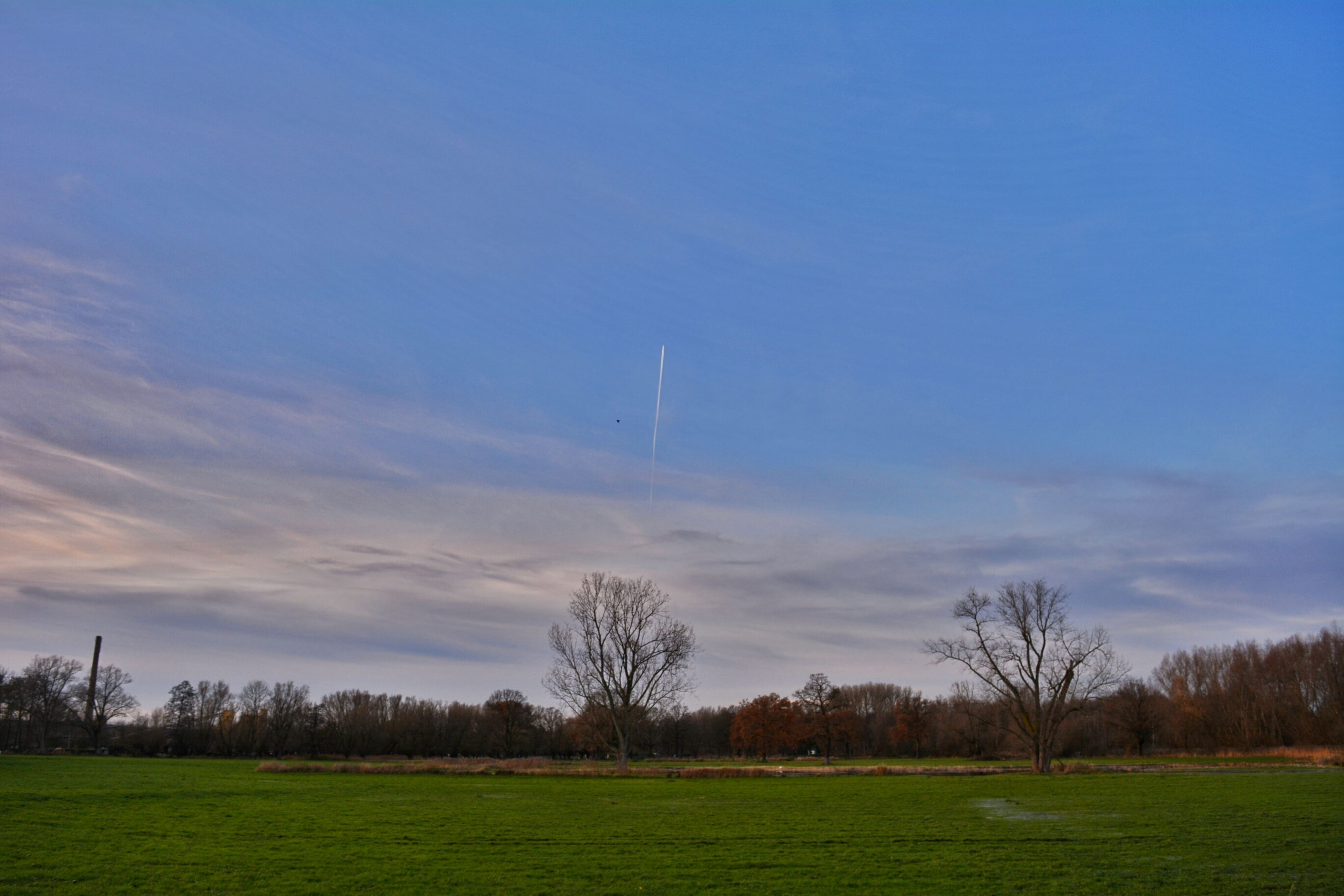 landscape, field, tranquil scene, tranquility, tree, grass, sky, scenics, beauty in nature, nature, blue, grassy, cloud - sky, non-urban scene, bare tree, rural scene, cloud, idyllic, silhouette, outdoors