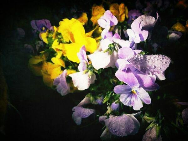 Flowers Nature Water Droplets Rain Drops No Edit Dropsoflife