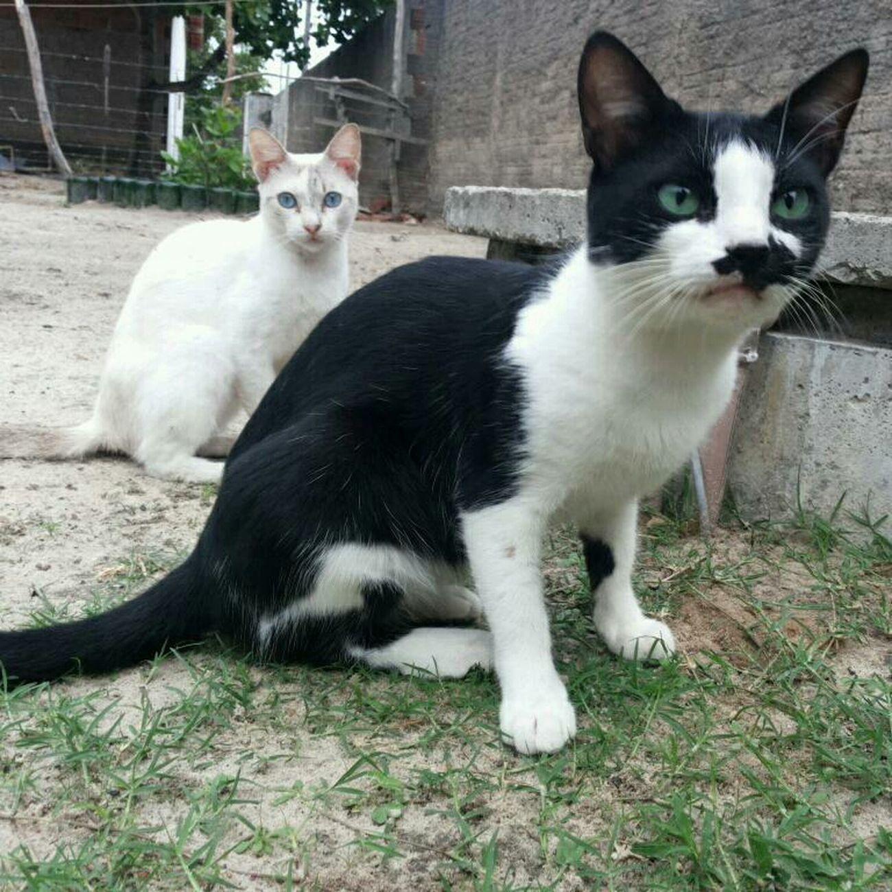 Hittler Bruna Cats