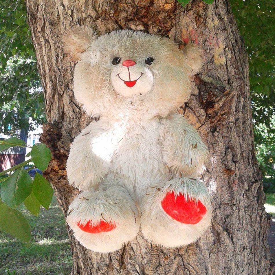 Продолжение сериала об игрушках, прибитых к деревьям. И ЭТО ВСЕ В ОДНОМ ДВОРЕ, БЛИН!!! омск сибирь медведя прибили к дереву садизм Omsk Siberia Sadism Crusified Bear Nail to the tree