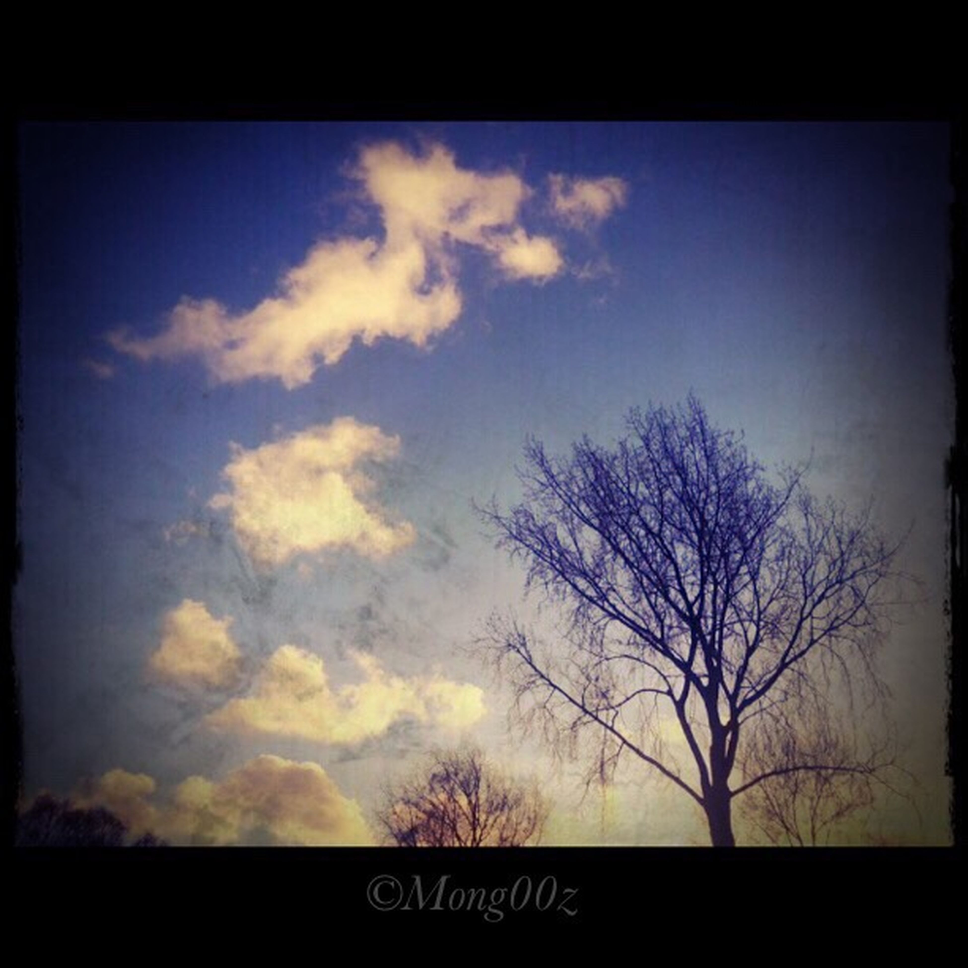 transfer print, auto post production filter, tree, sky, bare tree, low angle view, silhouette, cloud - sky, tranquility, cloud, branch, nature, scenics, beauty in nature, sunset, tranquil scene, cloudy, outdoors, no people, dusk