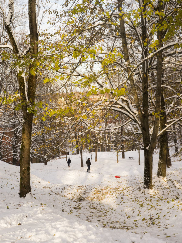 Tree Nature Beauty In Nature Outdoors Day Branch Scenics Landscape Postcard Winter Hillside View Brightly Lit Brightness Day Out Daylight Daytime Sunday First Snow