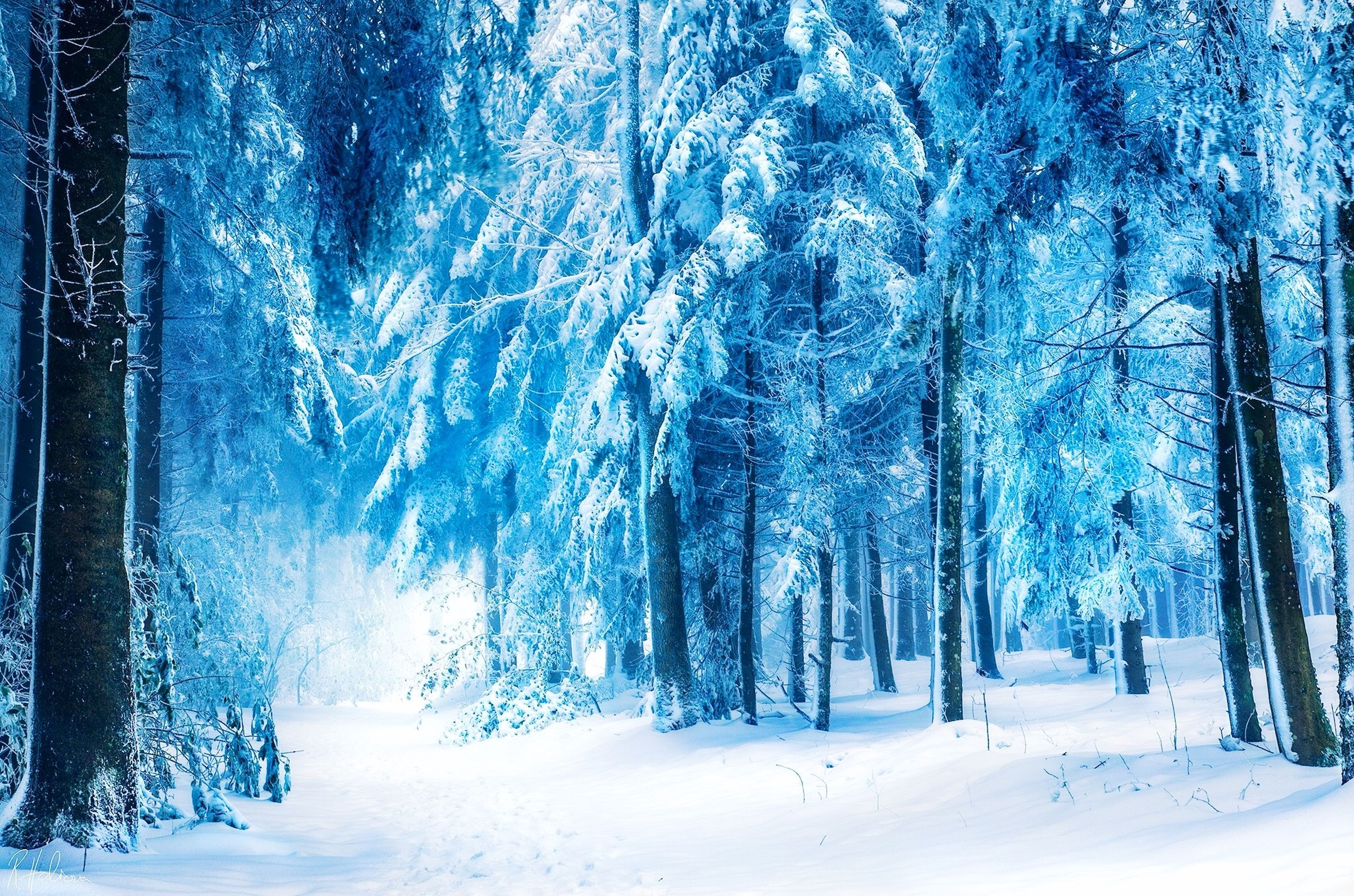 snow, winter, cold temperature, season, tree, weather, covering, tranquility, tranquil scene, beauty in nature, nature, scenics, landscape, frozen, white color, covered, tree trunk, forest, bare tree, woodland