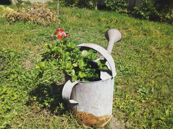 Grass Growth Front Or Back Yard Outdoors Day Green Color Nature Watering Plants Flower Sunlight Plant Beauty In Nature Sun Light Outside Close-up Flower Head Springtime Fragility Blossom Plant Growth Water Watering Can Wateringcan