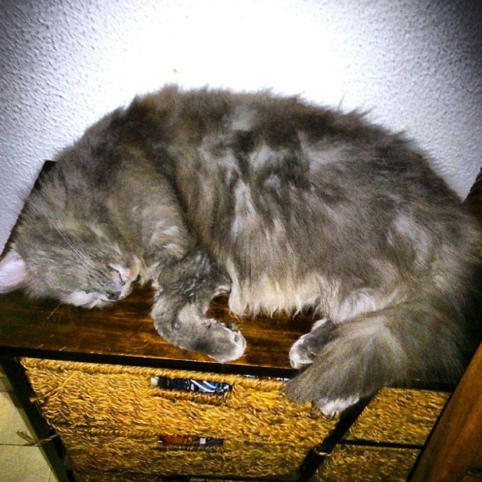 ParecesUmLeit ão  mikes Cat Huge fancy