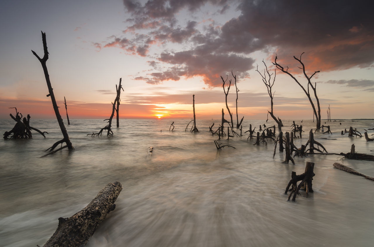 Mangroves stump during beautiful sunset Beach Branch Day Dead Death Dramatic Sky Dusk Ecology Ecosystem  Evening Mangroves Natural Nature No People Old Root Sea Silhouette Stump Sunset Tranquility Tree Tropical Water Wood