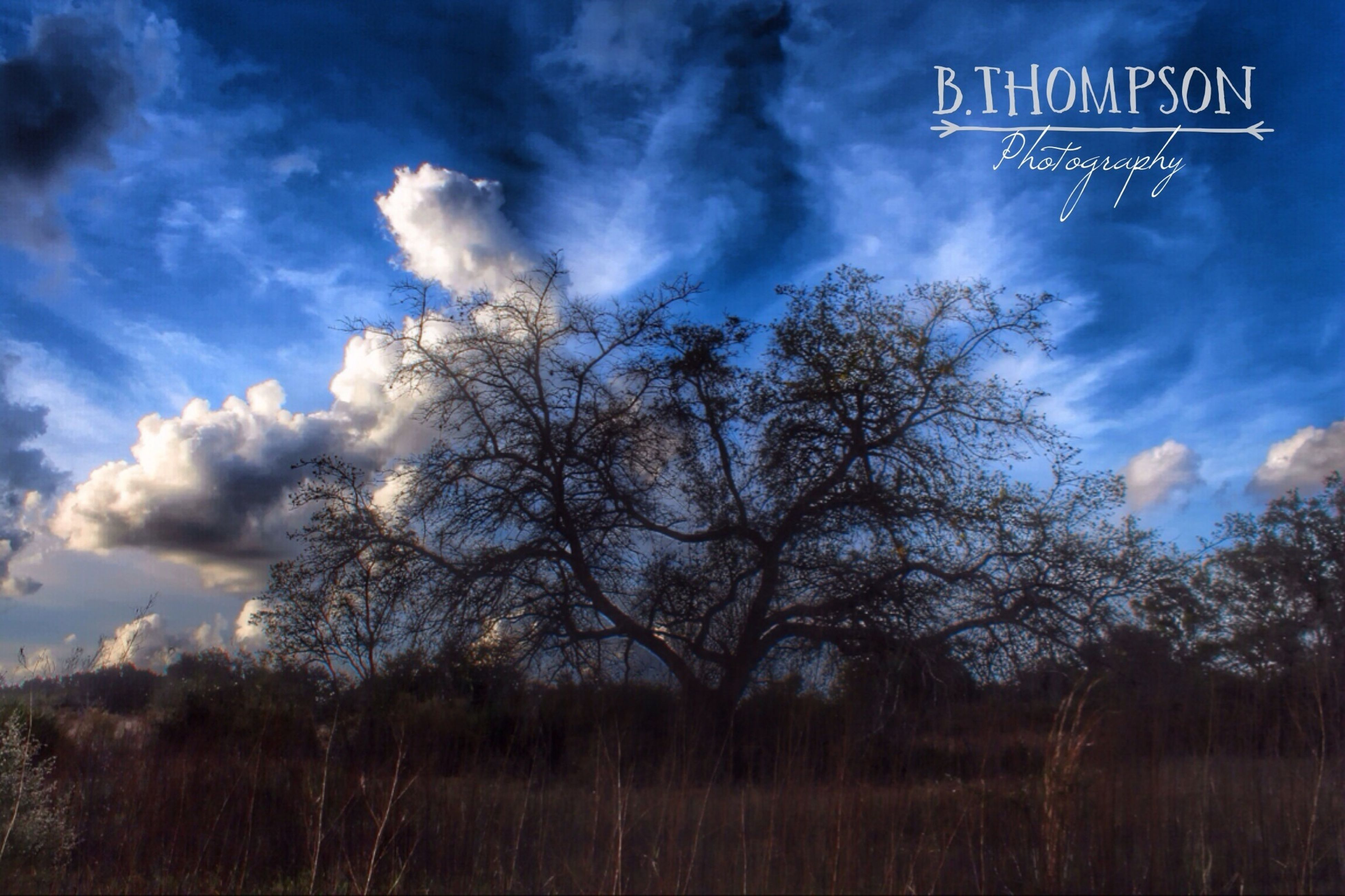 sky, text, tree, cloud - sky, western script, low angle view, communication, cloudy, cloud, nature, tranquility, blue, sign, information sign, beauty in nature, growth, road sign, tranquil scene, outdoors, no people