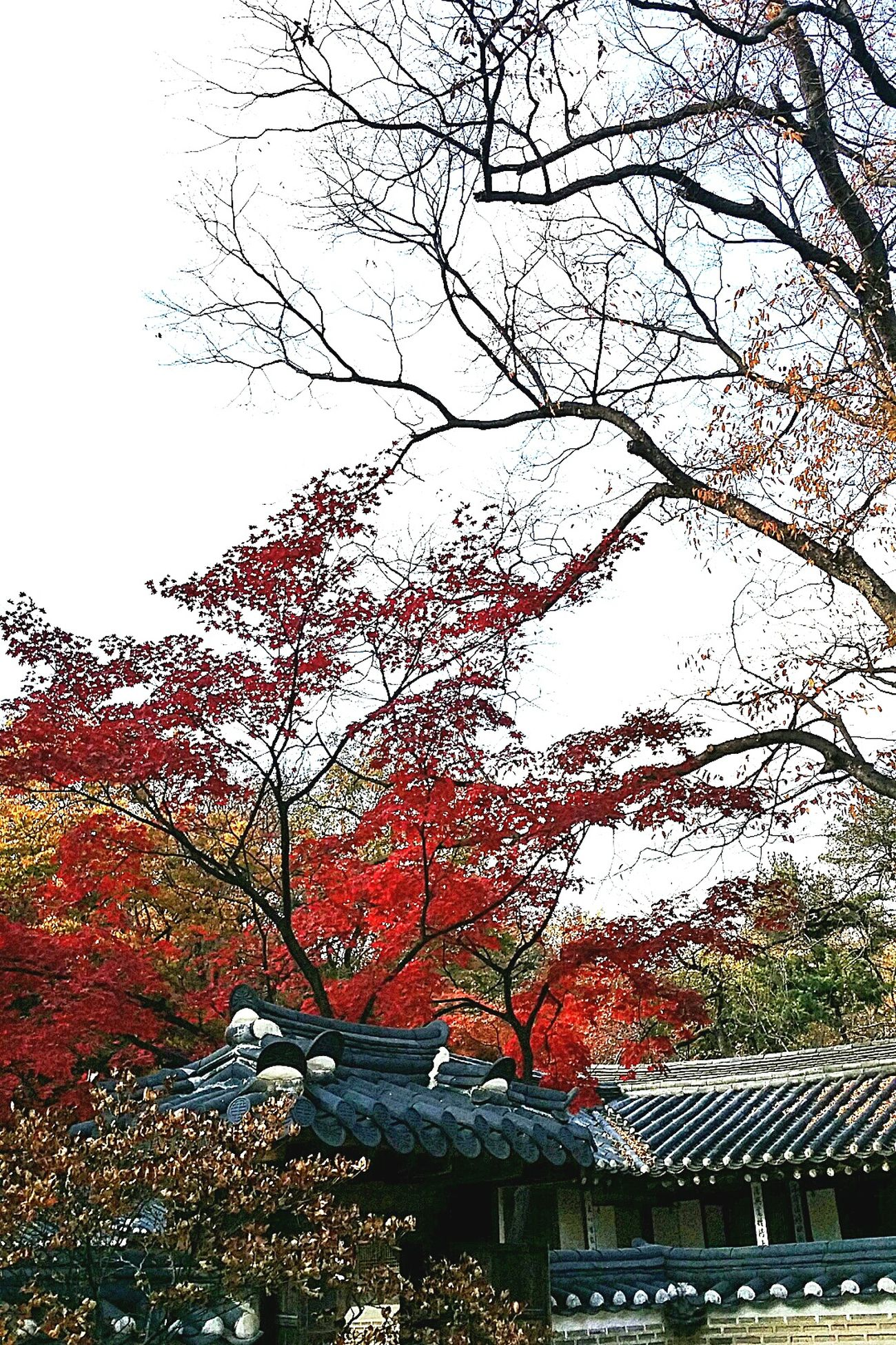 Autumn Colors Trees Seasons Seoulautumn2014 Autumn Changdeokgung Palace Seoul Korea Travel Photography Beautifulkorea