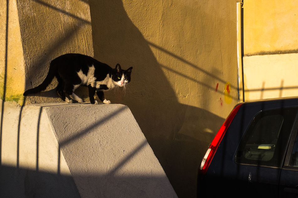 Cat Me If You Can Cat Color Feline France Goldenhour Marseille Pets Shadow Streetphoto_color Streetphotography Sunlight Yellow The Secret Spaces