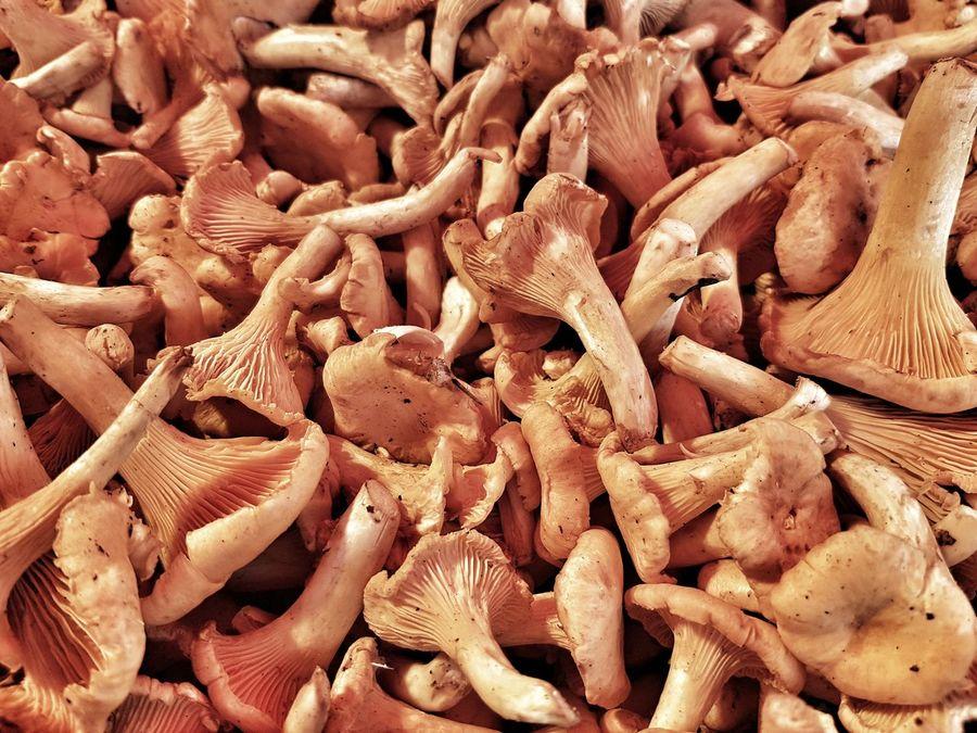 Abundance Close-up Farmers Market Market Stalls Vegetable Food Mushroom Chanterelles Chantarellus Cibarius Chantarelles