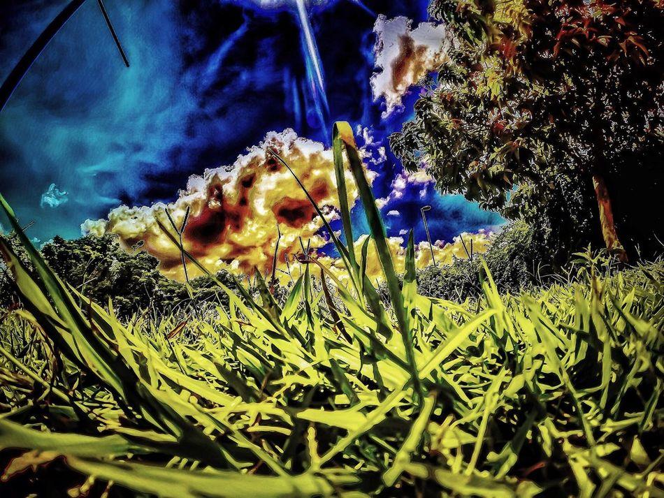 Hanging Out Hello World Cheese! Taking Photos Relaxing Enjoying Life Goprobrasil Goprooficial Weekend Summer GoPro Hero3+ Goprohero3plus Gopro Ciclovia  Pedalando Bike Skylovers SAMPAcity Saopaulo Carnaval2016 Natureza Carnaval Grass Nature ParqueVillalobos