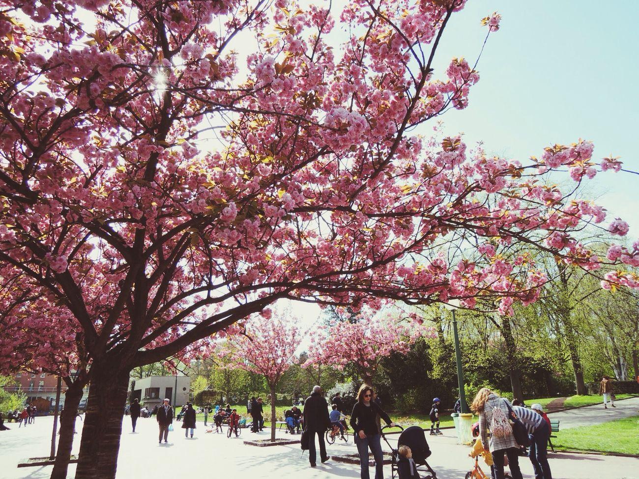 Paris France apr/2013 Paris Lycee De Claude De Monet Traveling